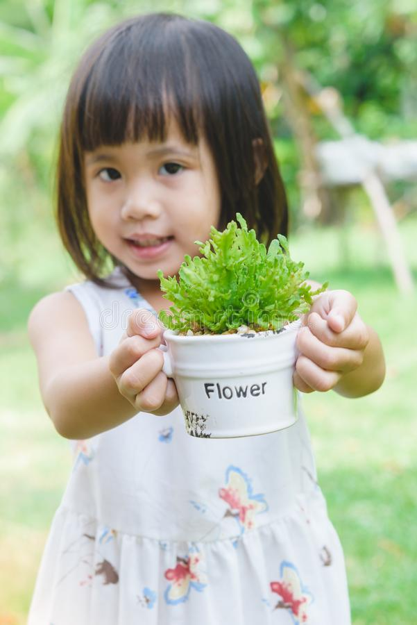 Asian child girl hands holding small pot with young plant stock image