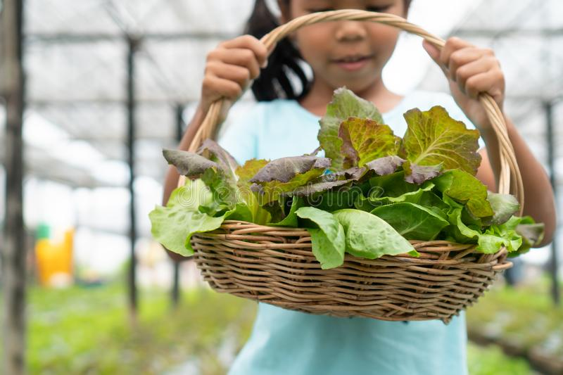 Asian child girl holding basket of fresh vegetables in organic hydroponic vegetable cultivation farm. Cute asian child girl holding basket of fresh vegetables in stock photo