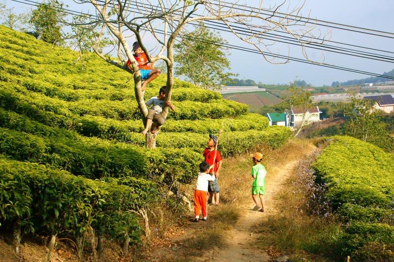Asian children, active kid, outdoor activity royalty free stock photos