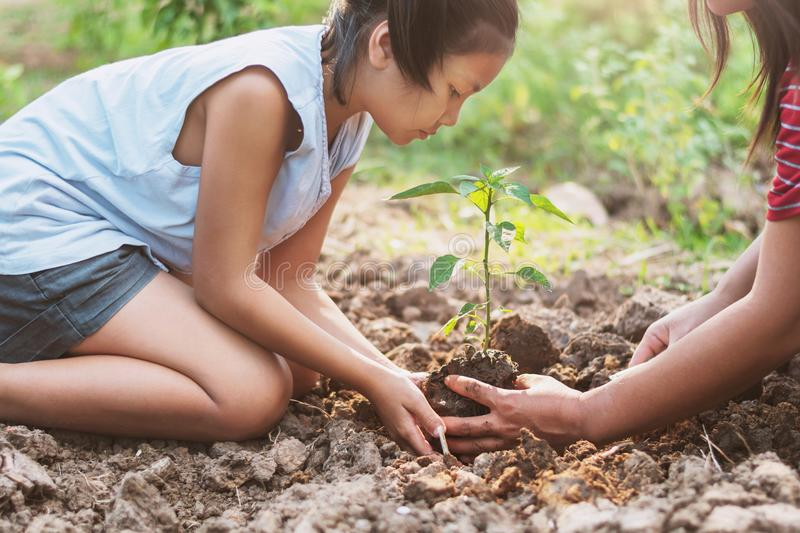 Asian children planting small tree with mater on soil. concept g. Reen world royalty free stock photos