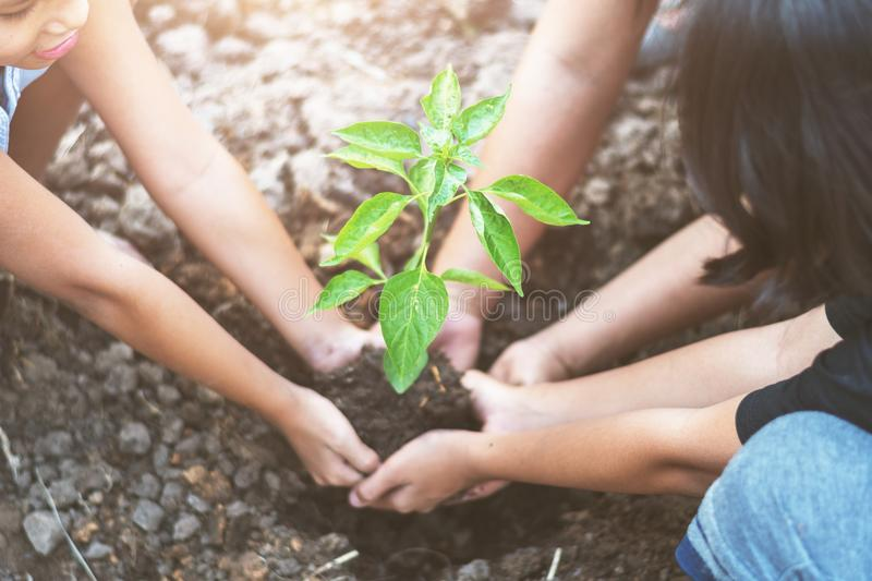 Asian children planting small tree with mater on soil. concept g. Reen world royalty free stock photo