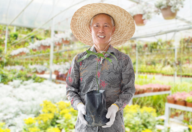 Asian Chinese farmer stock image