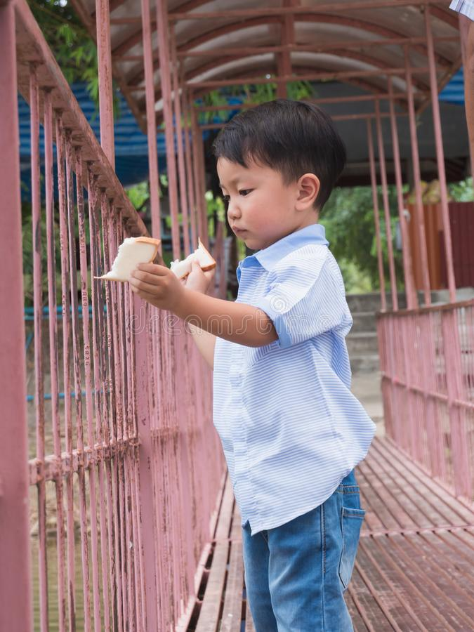 Asian cute kid break off fresh bread to feed fish royalty free stock images