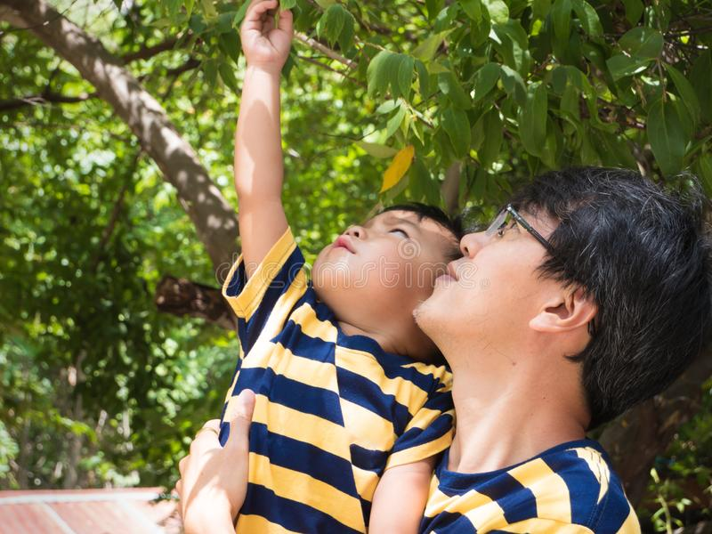 Asian cute little kid reaching hand to pick small seed . Asian cute little kid reaching hand to pick small seed from tree with natural green leaves background royalty free stock photography