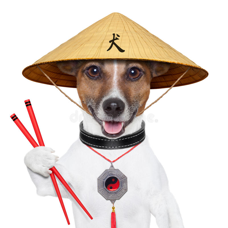 Asian dog. With chopsticks and asia hat royalty free stock photo