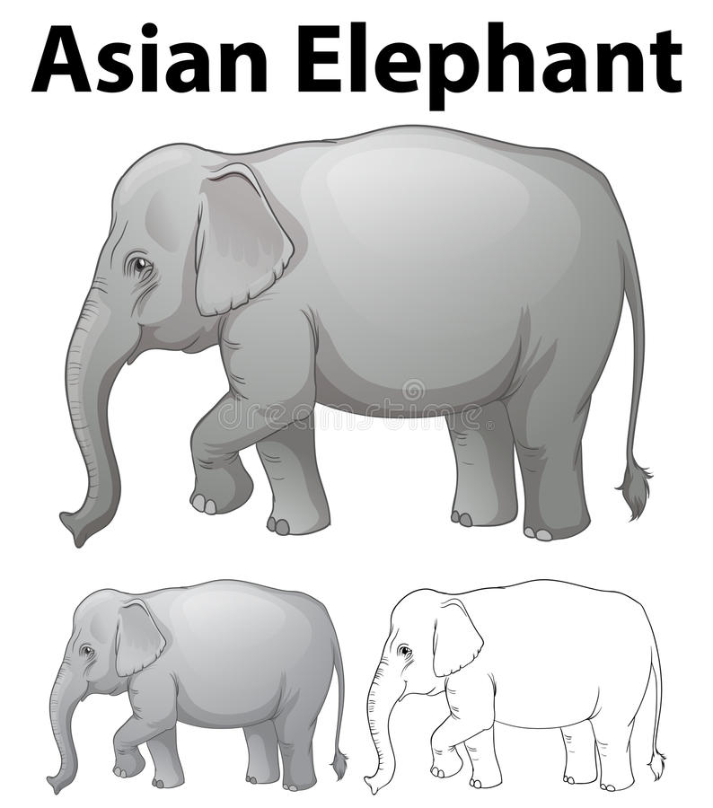 Asian elephant in three sketches stock illustration