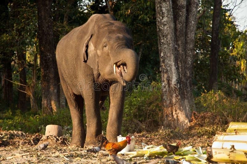 Download Elephant feeding stock image. Image of park, asia, nature - 30023569