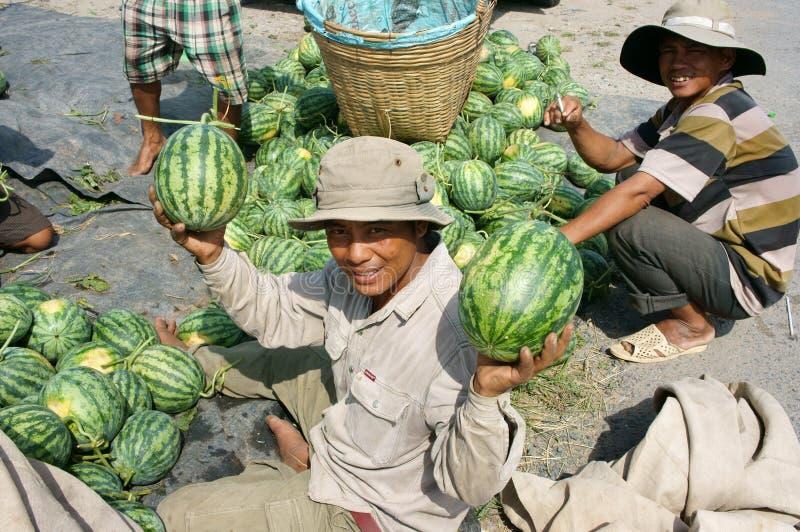 Asian farmer, agriculture field, Vietnamese, watermelon. THAP, VIET NAM- JULY 27: Group of Asian farmer working on agriculture field, Vietnamese man harvesting stock photo