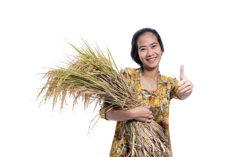 Asian farmer female showing thumb up with paddy rice grain on hand royalty free stock photography