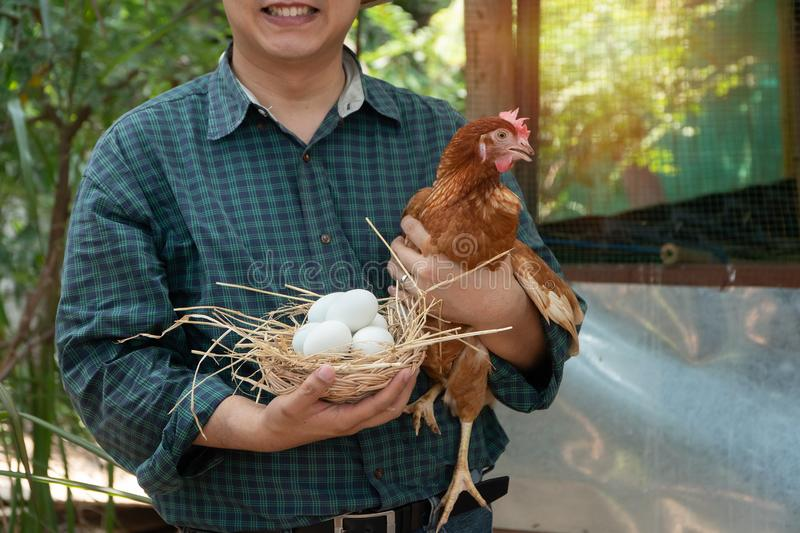 Asian farmer holding fresh chicken eggs into basket and hen was standing near hen beside chicken farm.Smiling because happy with t royalty free stock image