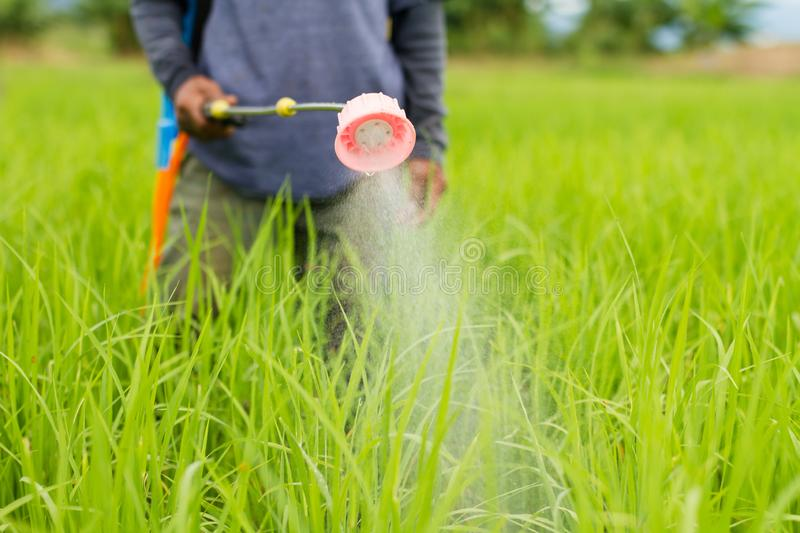Asian farmer holding a Sprayer and spraying organic fertilizer or Insecticide to protect crop plant from insect royalty free stock images