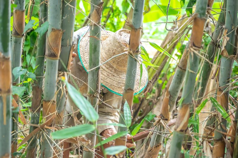 An Asian farmer man do his work on cutting bamboo tree in his organic farm. With copy space for texting royalty free stock photography