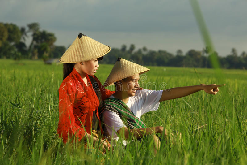 Asian farmer at rice field royalty free stock photo