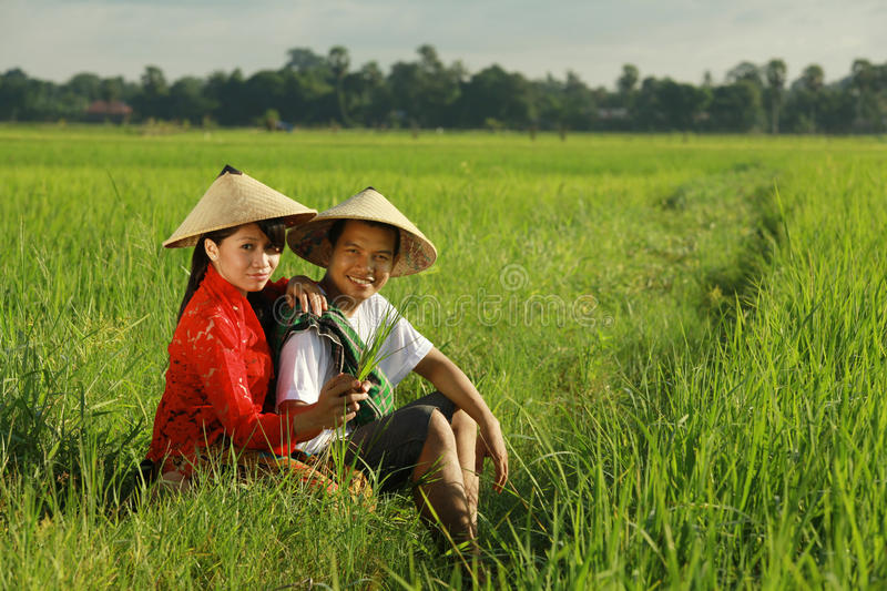 Download Asian farmer at rice field stock image. Image of vietnam - 13421139