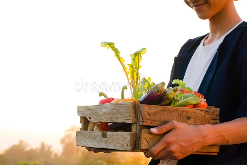 Asian farmer with smiling face holding vegetable produce at sunset royalty free stock photos