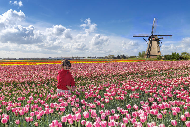 Asian farmer in a tulips farm. Little asian girl farming in tulips farm landscape with pink red tulips and a windmill