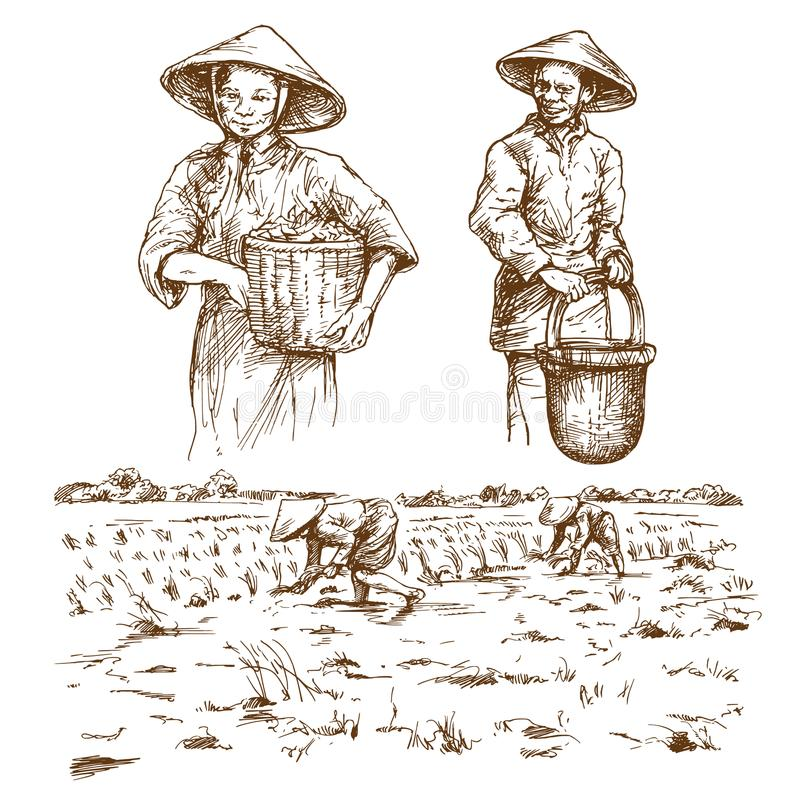 Asian farmers working on Field. stock illustration