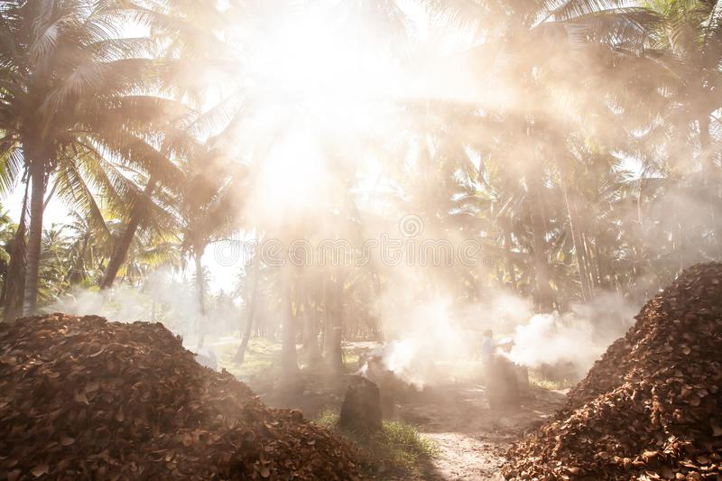 Asian female gardener burning coconut shell charcoal in coconut palm trees garden. Agriculture, simple life style in Southeast. Asian female gardener burning royalty free stock photography