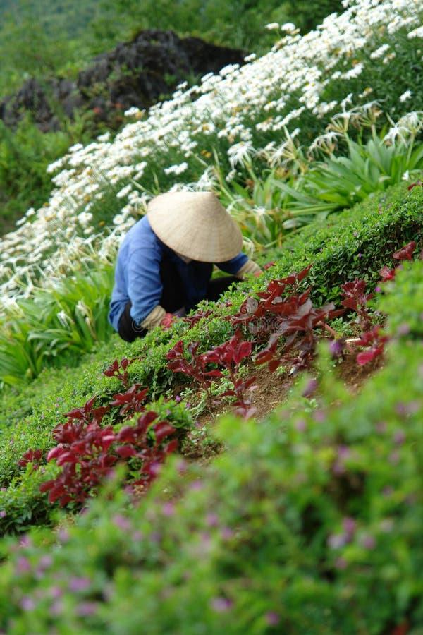 Download Asian Flower Worker In Garden Stock Image - Image: 1201613