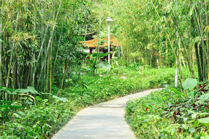 Asian garden. Green bamboo trees and trail in aisna garden stock photography