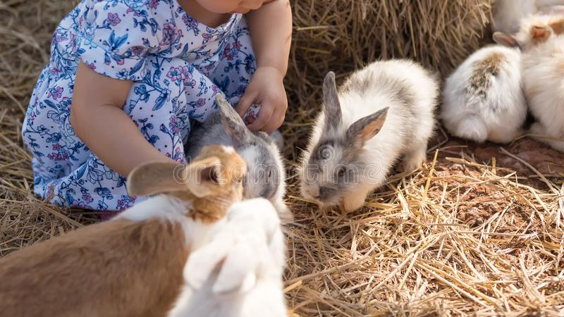 Asian girl with fluffy rabbits in farm royalty free stock photo