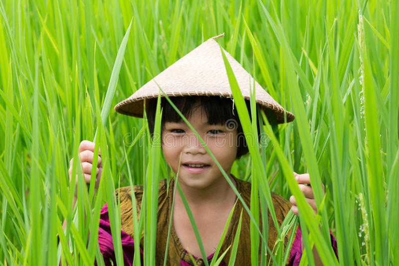 Asian girl in rice paddy royalty free stock photo