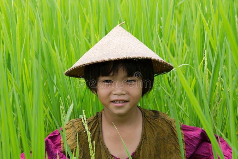 Asian girl in rice paddy stock photo