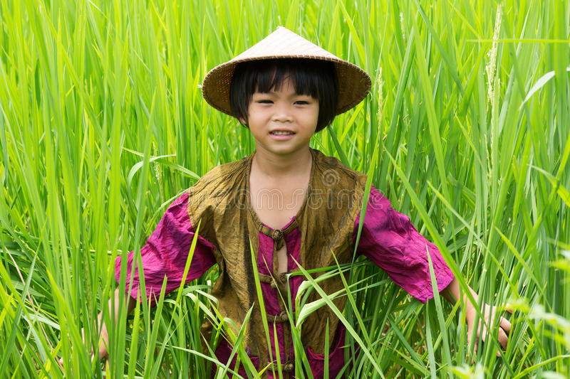 Asian girl in rice paddy stock images