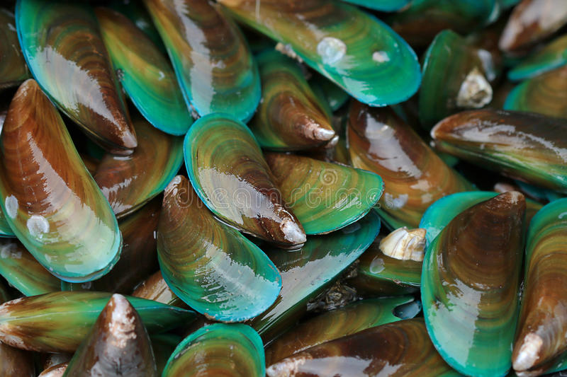 Asian green mussel. Food background stock photo
