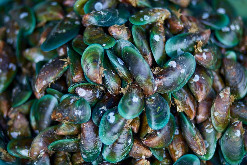 Asian green Mussels background stock photos