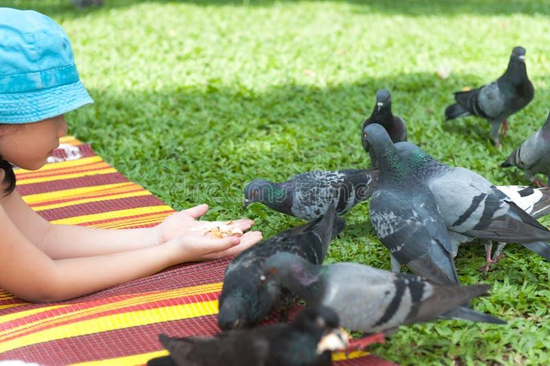 Asian kid feeding pigeons stock photos