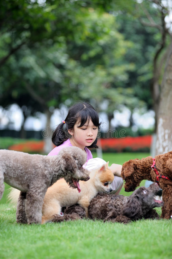 Asian kid playing with dogs royalty free stock photography