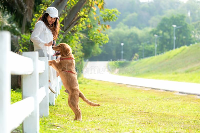 Asian lifestyle woman playing  with golden retriever friendship dog so happy royalty free stock photos