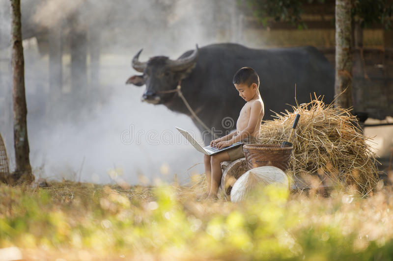 Asian little boy playing laptop in farm field and buffalo behind stock photo