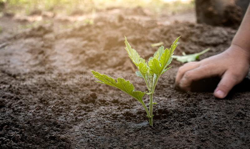 Asian little child girl planting the young tree in the garden. Saving world environment concept stock images