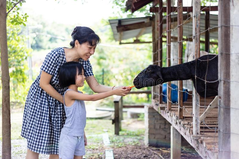Asian Little Chinese Girl and mother feeding a goat with Carrot royalty free stock photos
