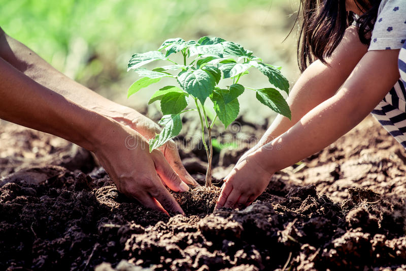 Asian little girl helping his father to plant the tree. In the garden as save world concept stock photography