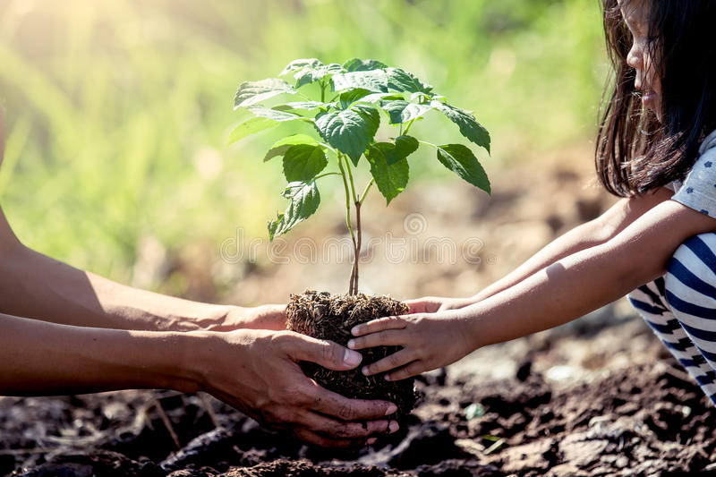 Asian little girl helping his father to plant the tree. In the garden as save world concept stock photos