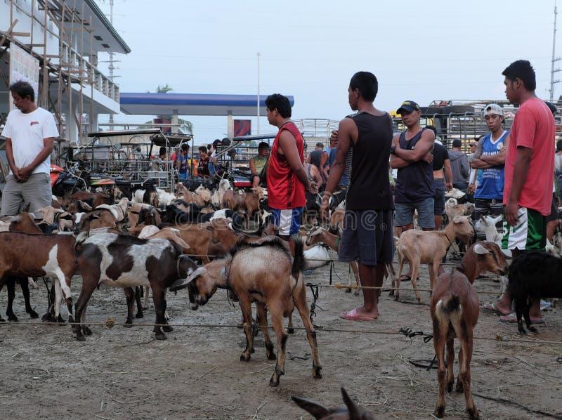 Asian Livestock market scene. Goats for sale in Padre Garcia Livestock Auction Market, Batangas, Philippines. Padre Garcia, Batangas, Philippines - May 03, 2019 stock image