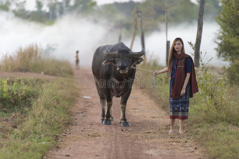 Asian local woman walking with her buffalo stock photography
