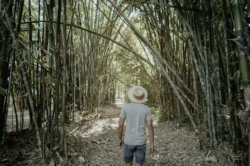 Asian male in bamboo forest. Man adventure by him self royalty free stock photo