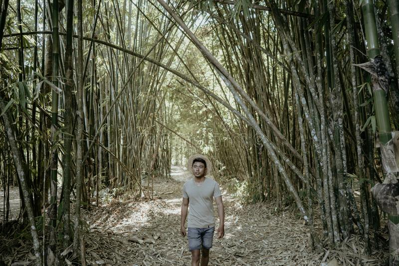 Asian male in bamboo forest. Man adventure by him self royalty free stock image