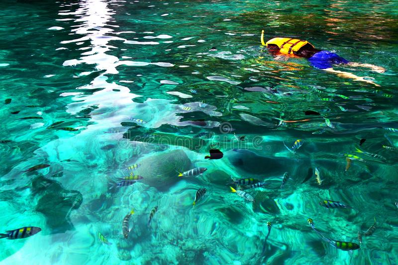 Asian man in orange life jacket with diving mask is snorkeling among many Indo-Pacific sergeant fish on Andaman Sea. Krabi, Thailand with Left copy space royalty free stock photography