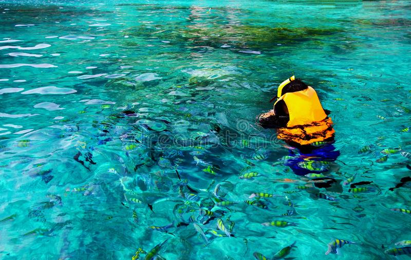 Asian man in orange life jacket with diving mask is snorkeling among many Indo-Pacific sergeant fish. On Andaman Sea, Krabi, Thailand with Left copy space royalty free stock photo
