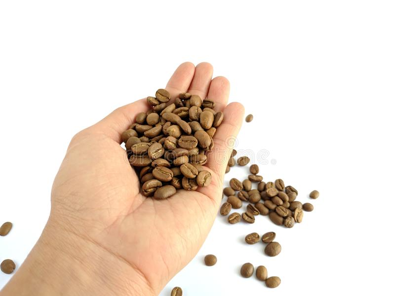 Asian man`s hands holding coffee beans isolated on white stock image
