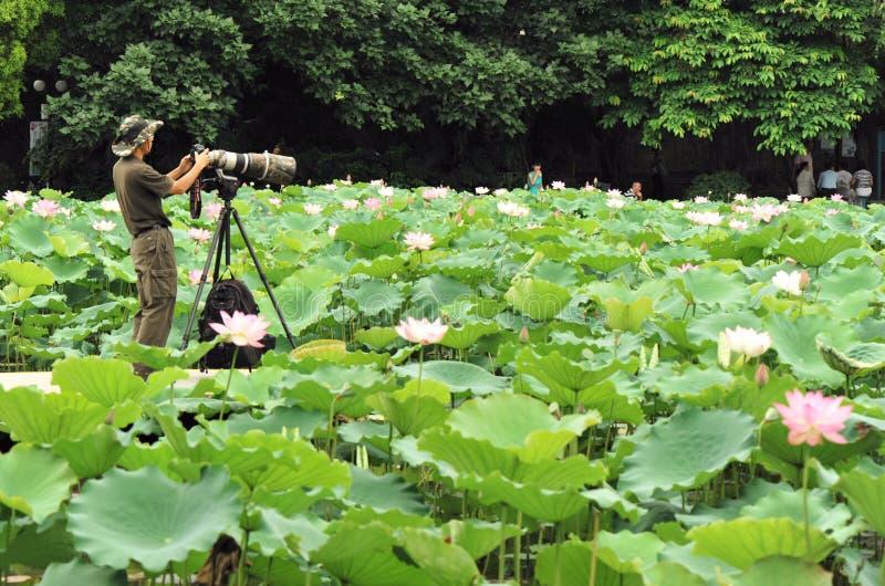 Asian man taking photo. At lotus pond, honghu park, shenzhen city, china may 24, 2012 royalty free stock images