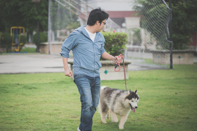 Asian man walking with a siberian husky don stock photo