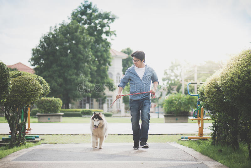 Asian man walking with a siberian husky don royalty free stock photography