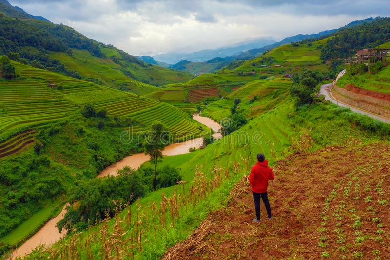 An Asian man watching at paddy rice terraces, agricultural fields in countryside of Mu Cang Chai, Yen Bai, mountain hills valley royalty free stock photos