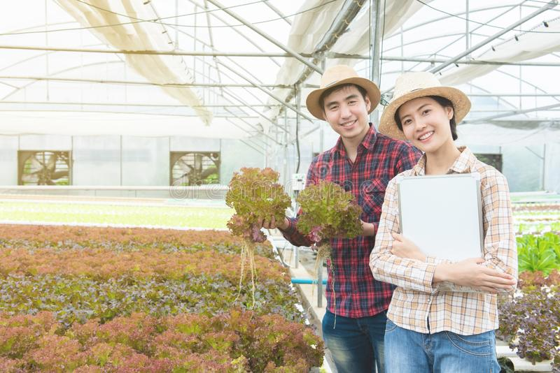Asian man and asian woman gardeners hand hold lettuce and hold white board in hand,Small business entrepreneur concept. Asian men and asian women gardeners hand royalty free stock photo